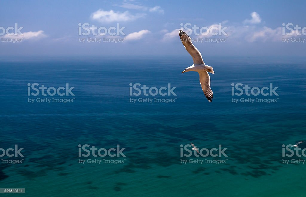 Flight over the ocean royalty-free stock photo