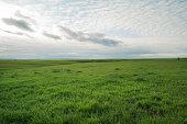 A view from the Flint Hills of Kansas