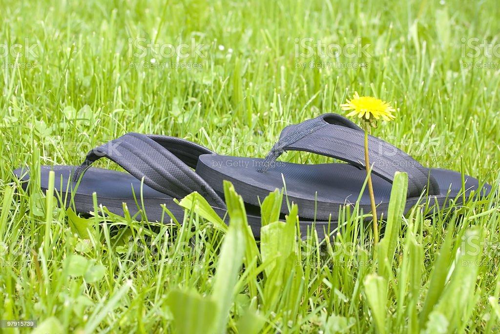 Flip Flops royalty-free stock photo