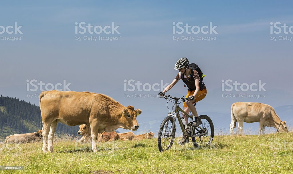 Flirting with the cow royalty-free stock photo