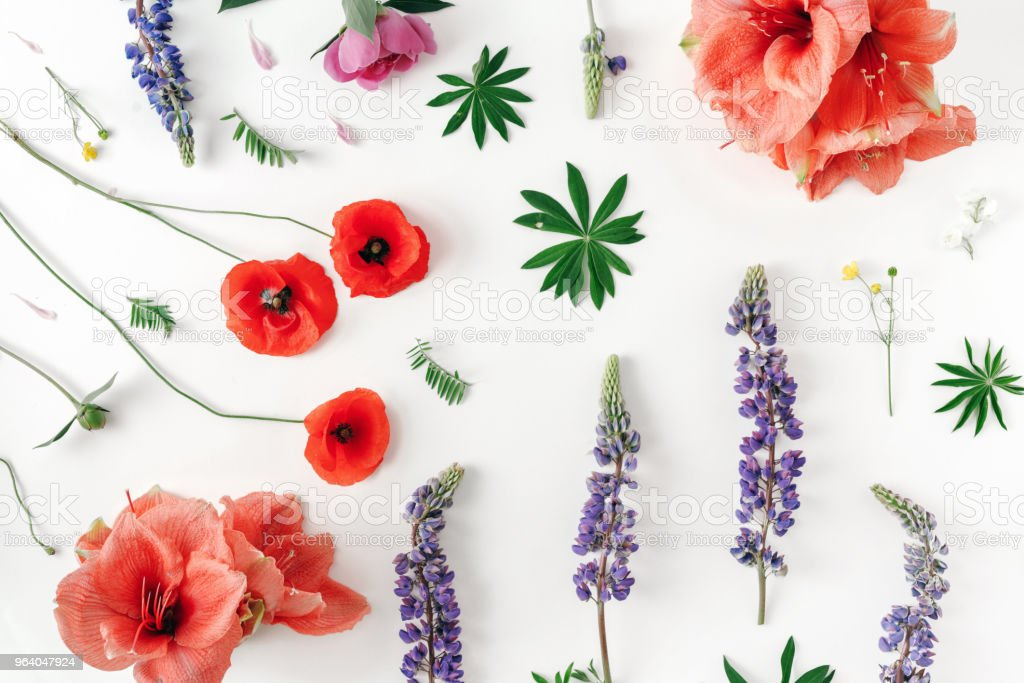 Fllat lay floral pattern made of wildflowers, poppy, amaryllis, peonies on white background, top view. Pattern of flowers - Royalty-free Amaryllis Stock Photo