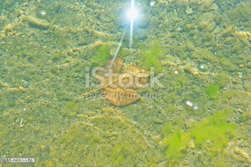 Floating Autumn Leaf on Water at Beach.Maple leaves floating in sea.