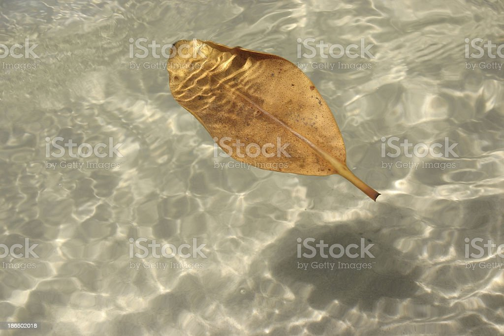 Floating Autumn Leaf on Water at Beach royalty-free stock photo