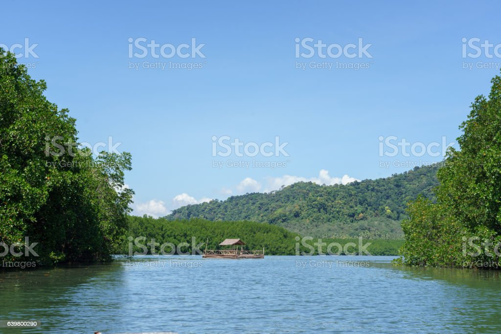 Floating bamboo raft with mangrove forest and blue sky background stock photo