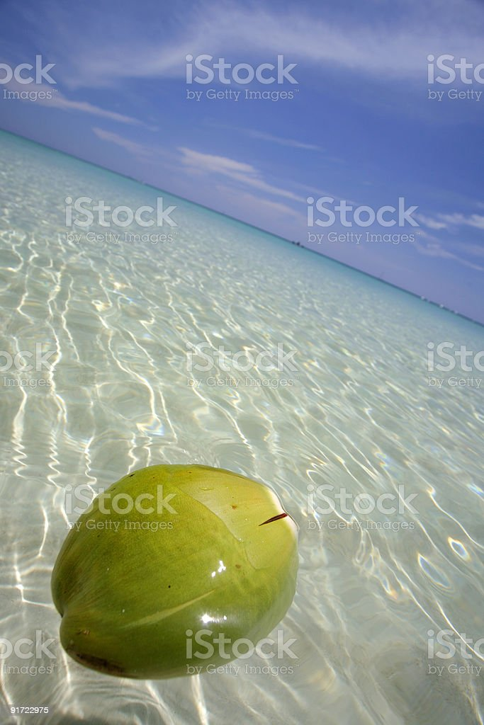 Floating Coconut stock photo