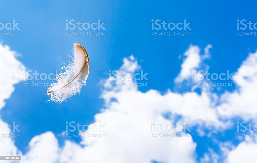 Floating feather stock photo