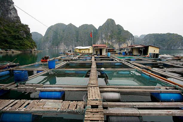 Floating fish breeding stock photo