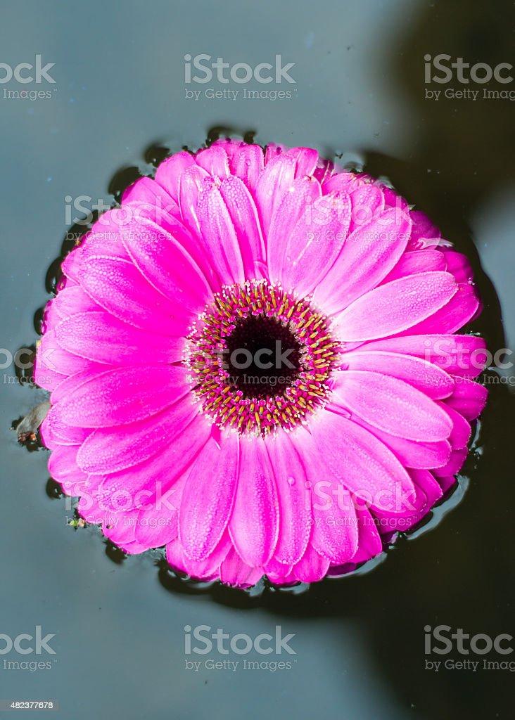 Floating Flower Blossom stock photo