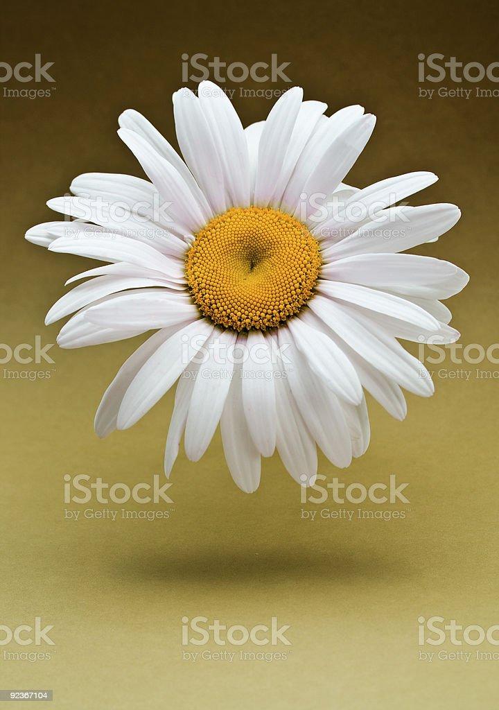 floating flower royalty-free stock photo