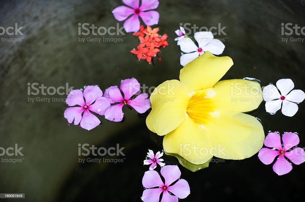 floating flowers stock photo
