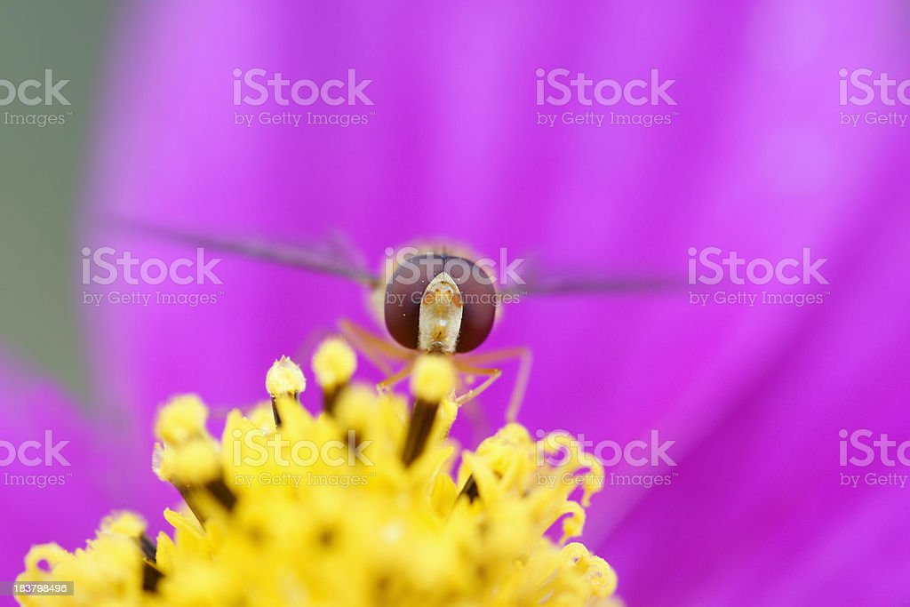Floating fly stock photo