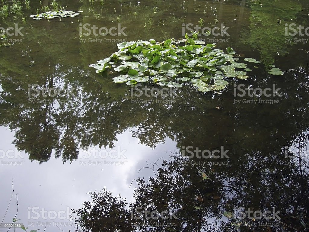 Floating groups of water lilies on a pond royalty-free stock photo