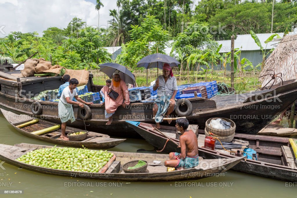 Barisal, Bangladesh - July 11, 2016: Floating guava market on the backwaters of Barisal. Selling to wholesalers on the larger boat. stock photo