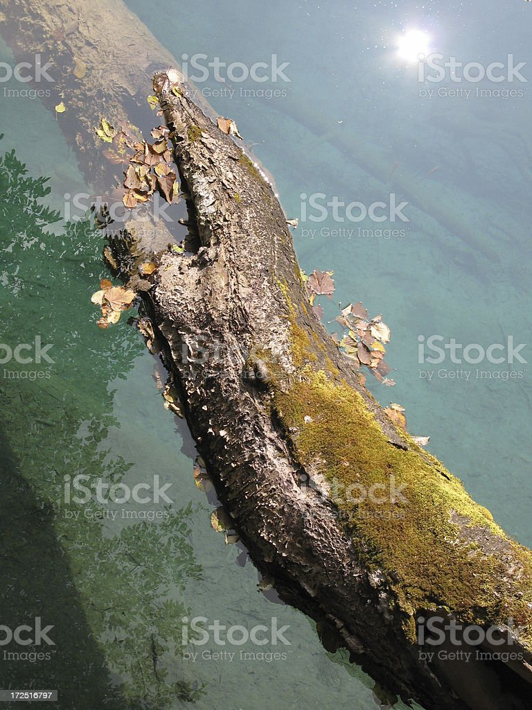 Floating Log on a Calm Clear Lake in Autumn royalty-free stock photo