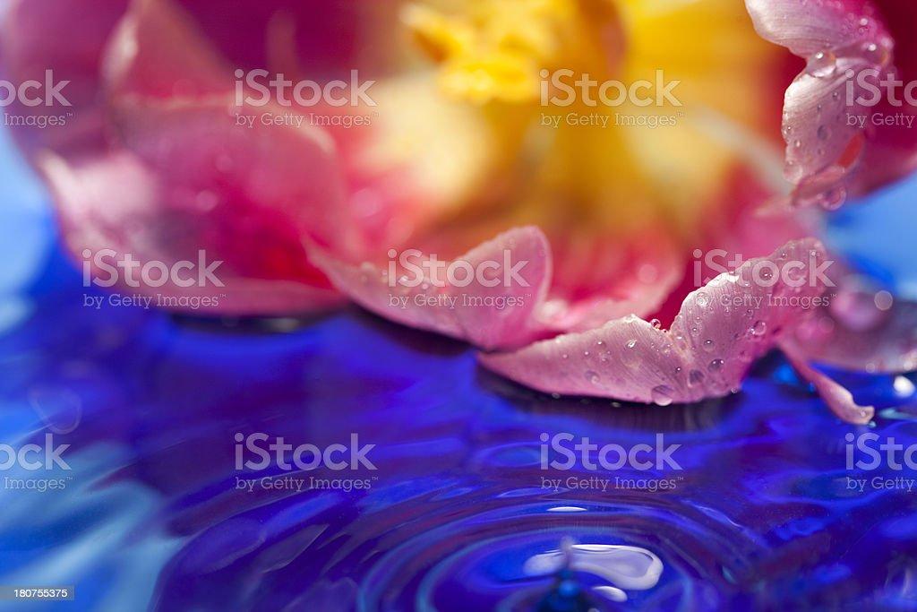 Floating petal royalty-free stock photo