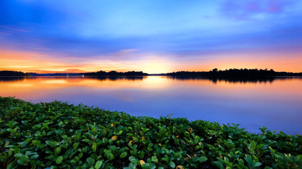 floating plants - singapore nature stock photos and pictures