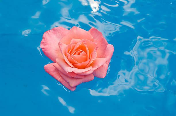 Floating rose petal picture id121394685?b=1&k=6&m=121394685&s=612x612&w=0&h=kpd3e0rznhtdxa e5af hlsgtw 7avhnoeihqxbcijm=