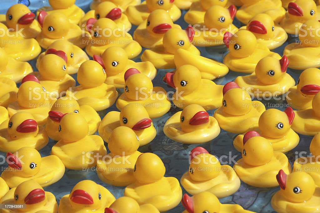 Floating Rubber Duckies royalty-free stock photo