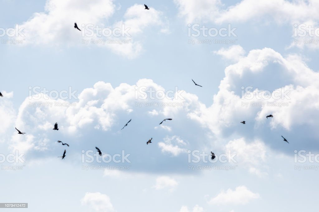 Flock, many birds vultures flying in sky above deep hole famous...