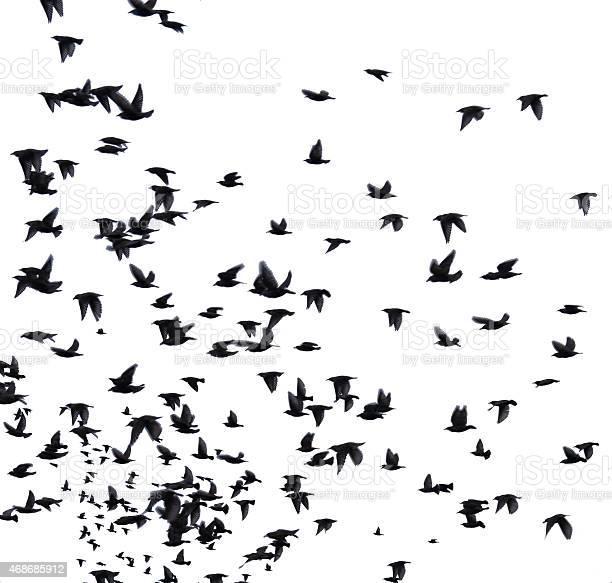 Flock migratory birds picture id468685912?b=1&k=6&m=468685912&s=612x612&h=rsuafgweld96bh00feijizjfdlvodxhmd6bzvs9 be0=