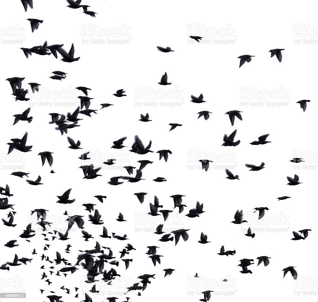 flock migratory birds. stock photo