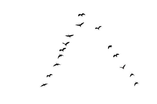 Flock of bare faced ibis picture id1025484892?b=1&k=6&m=1025484892&s=612x612&w=0&h=oeqi8nhl1p clyiflba5e y9y6xj qwtzdpsmxolztc=