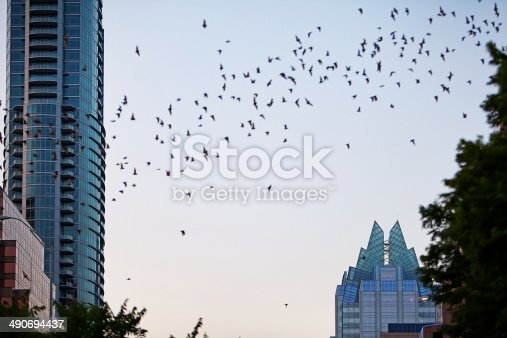 A flock of bats is flying above downtown Austin, Texas.  RM