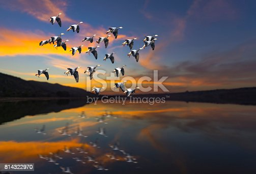 istock Flock of bird Flying at sunset over a lake 814322970
