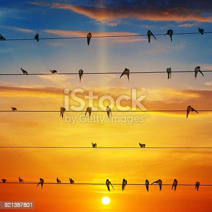 istock flock of birds and  sunrise 521387801