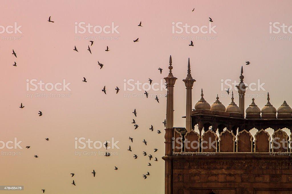 Flock of birds at sunset stock photo
