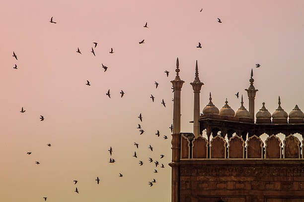 Flock of birds at sunset Jama Masjid,Agra,birds,mosque,India agra jama masjid mosque stock pictures, royalty-free photos & images
