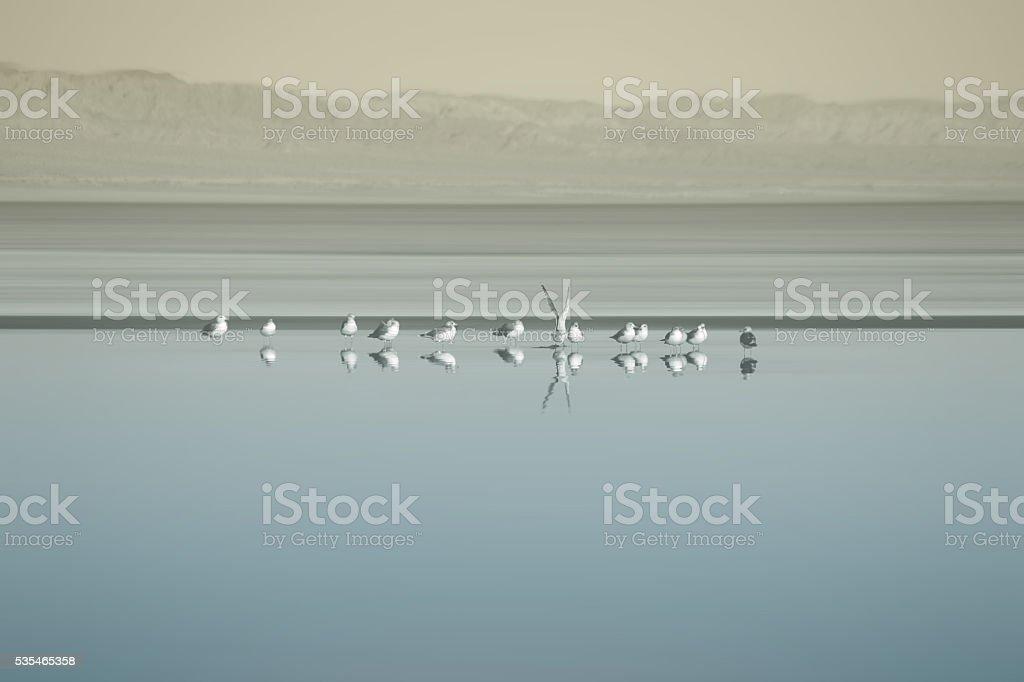 Flock of birds at the Salton Sea stock photo