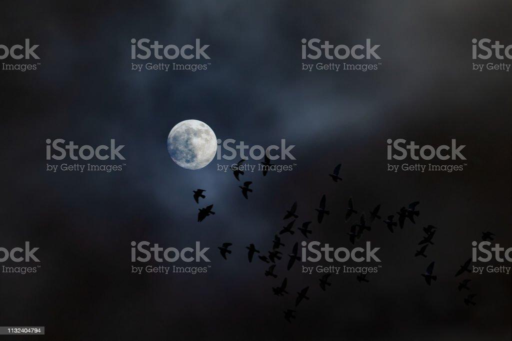 A Flock Of Birds Fly At Night Towards The Moon Stock Photo