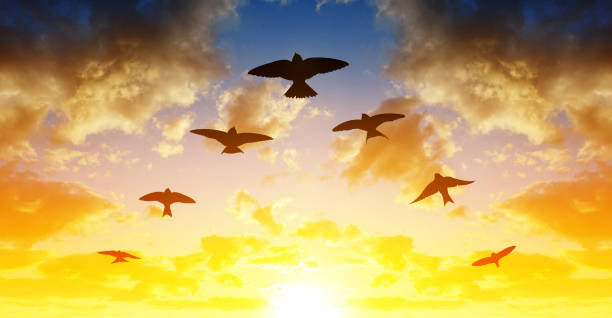 Flock of birds flying in V-formation at sunset. stock photo