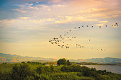 A flock of birds flying on the lake of Wetland Park