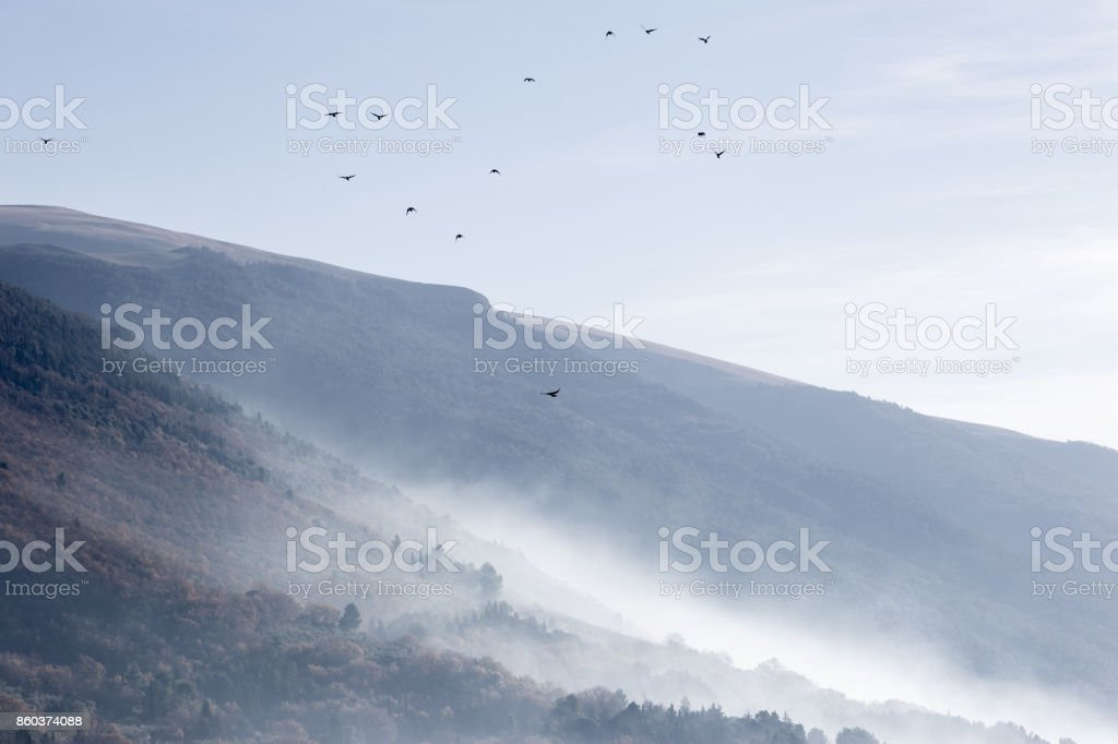 A flock of birds flying over mountains and hills covered by mist stock photo