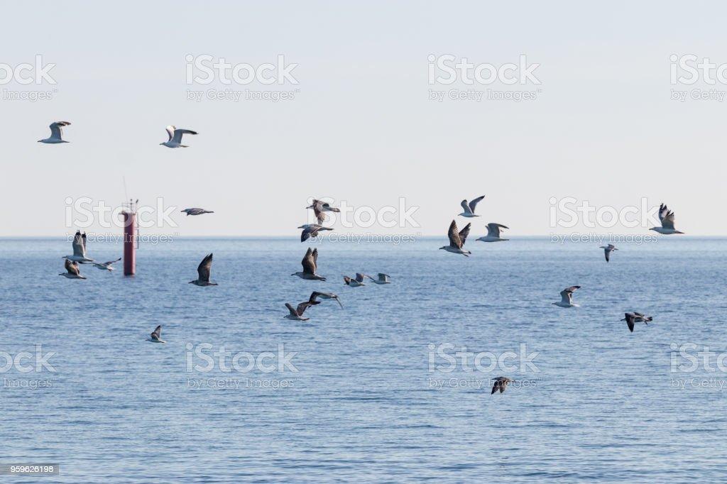 Bandada de pájaros volando sobre el mar - Foto de stock de Agua libre de derechos