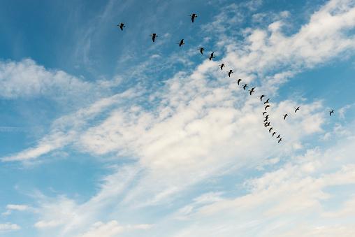 flock of birds in a blue sky