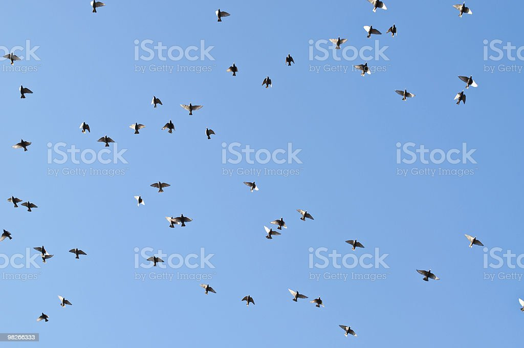 Stormo di uccelli in volo foto stock royalty-free