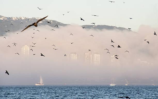 Flock of birds in front Foggy City Skyline stock photo