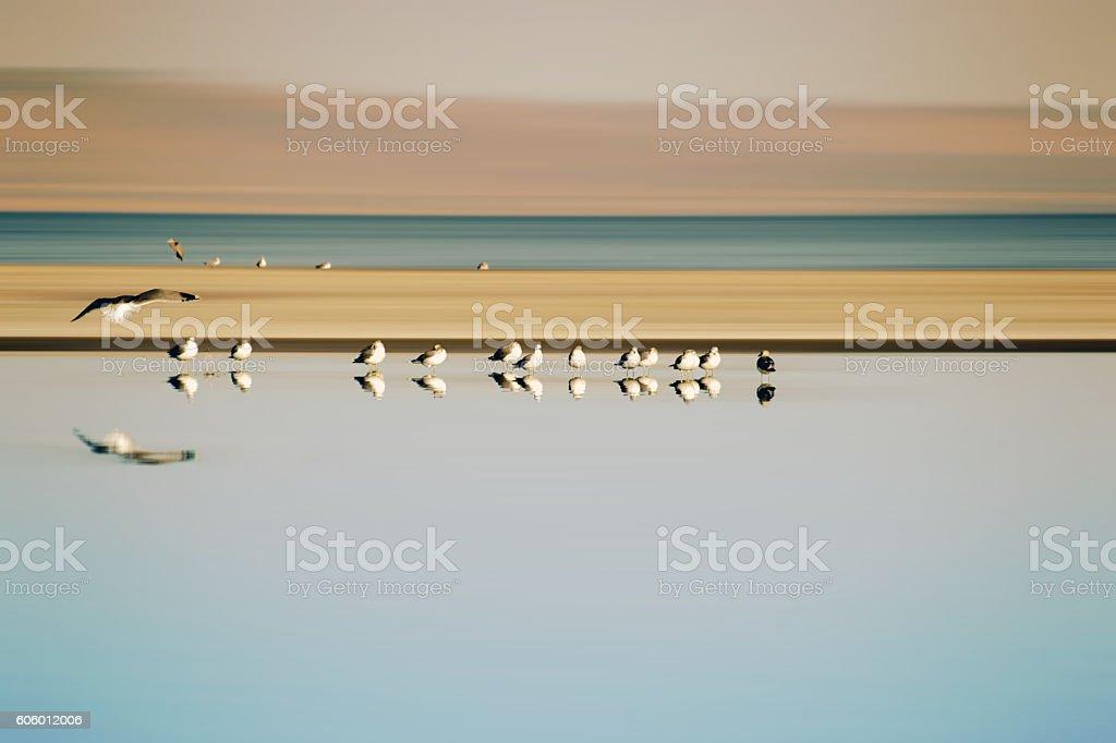 Flock of Birds in Row stock photo