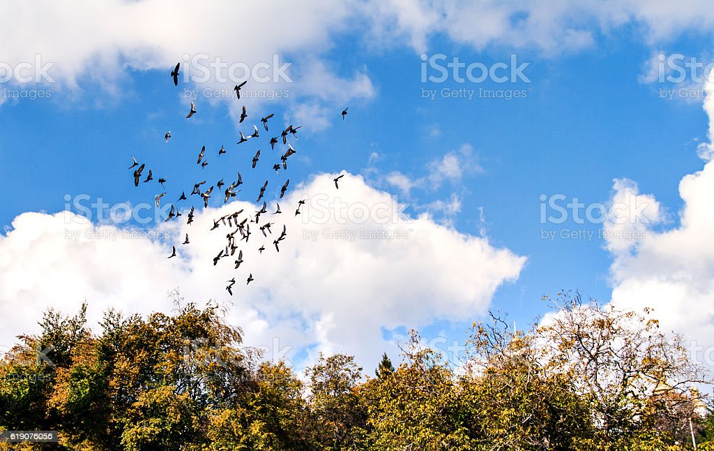flock of birds in the cloudy sky above the trees stock photo