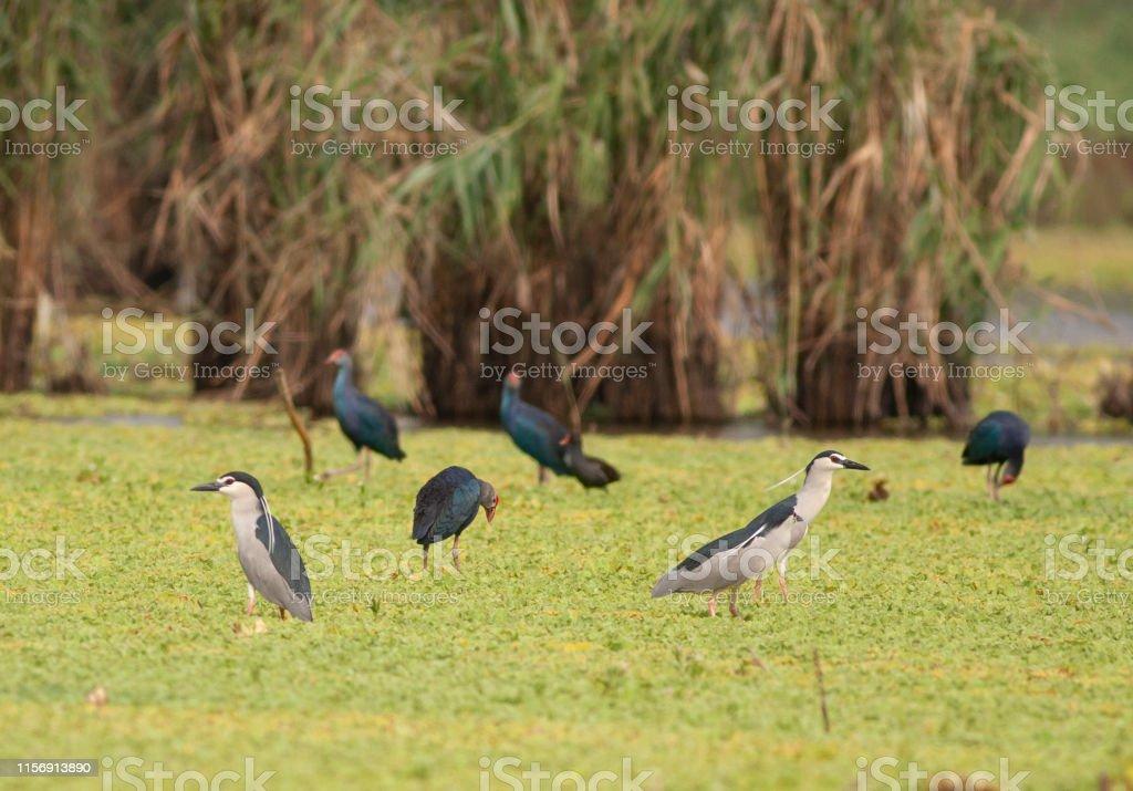 Flock of birds in wetland