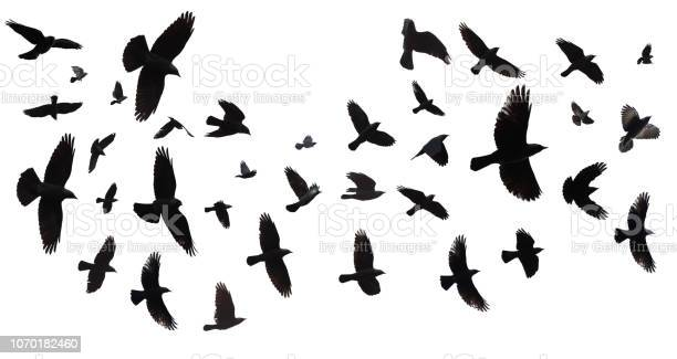 Photo of Flock of birds isolated