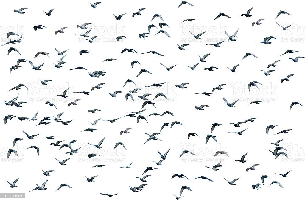 Vogelschwarm, isoliert – Foto