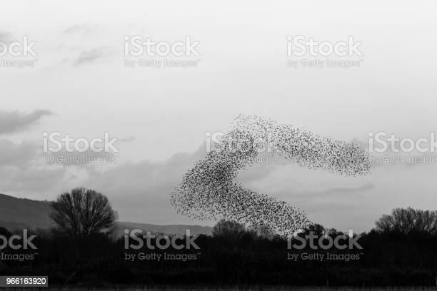 Flock Fåglar Att Göra Vackra Och Surrealistiska Figurer I Himlen En-foton och fler bilder på Bildbakgrund
