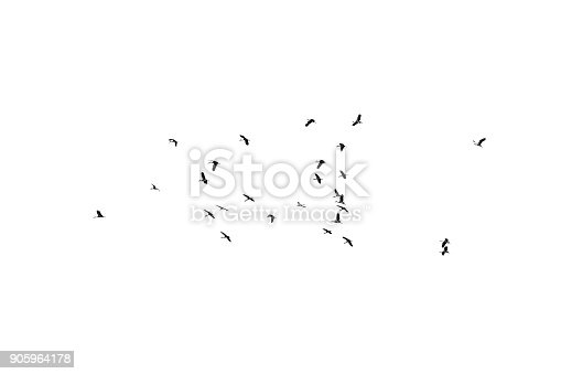 istock Flock of birds on a white background. For design. Flock of birds isolated on a white background. Clipping path. 905964178