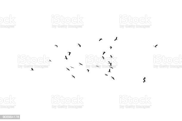 Photo of Flock of birds on a white background. For design. Flock of birds isolated on a white background. Clipping path.