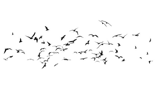 Flock of birds on a white background stock photo
