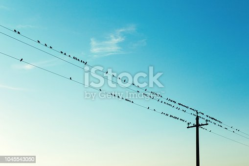 Birds on high voltage cables at sunset, blue sky on background